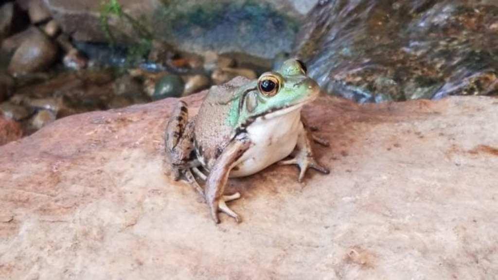 Metro Detroit Nature Center Frog
