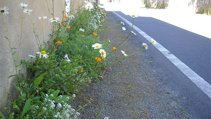 ma rue en fleurs des kits de graines