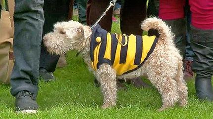 abejas protesta 2