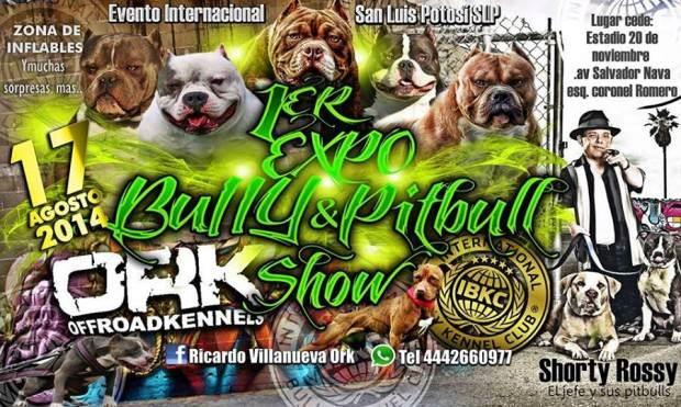 1 expo bully & pitbull show