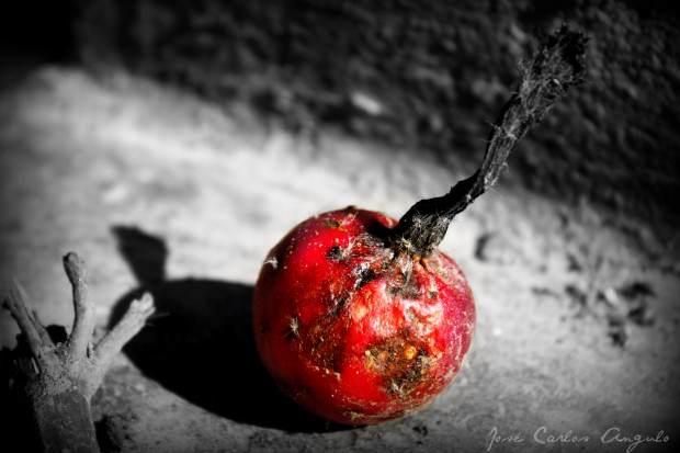 manzana-podrida