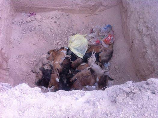 perros sacificados matehuala