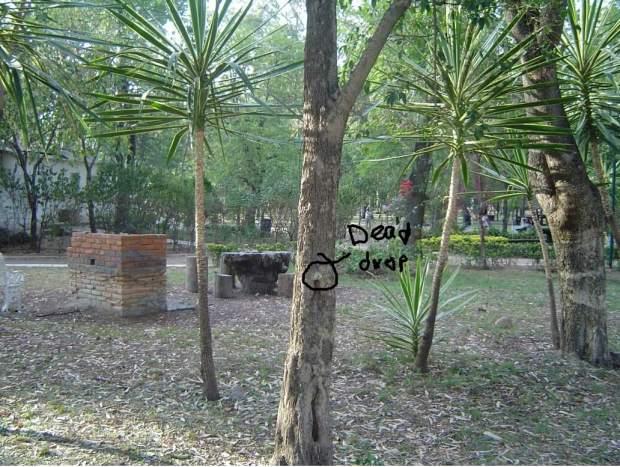 Ubicacion Dead Drop San Luis Potosí