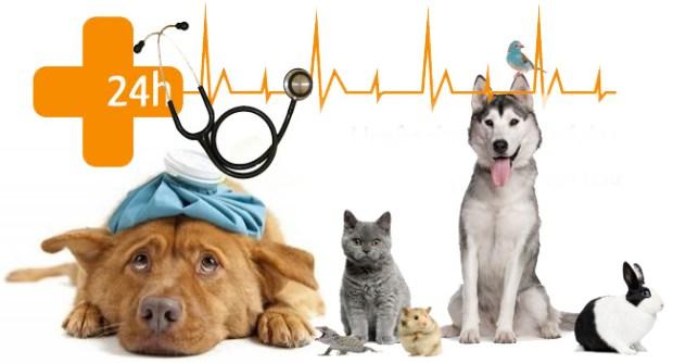 urgencias-veterinaria