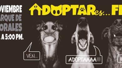 """Photo of Invitan al evento """"Adótares…"""" en beneficio de perros y gatos sin hogar"""
