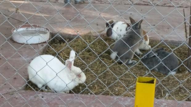 Malas condiciones Zoologico Tangamanga
