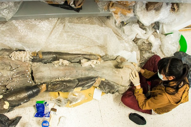 restos de mamut de la FCSyH (1)