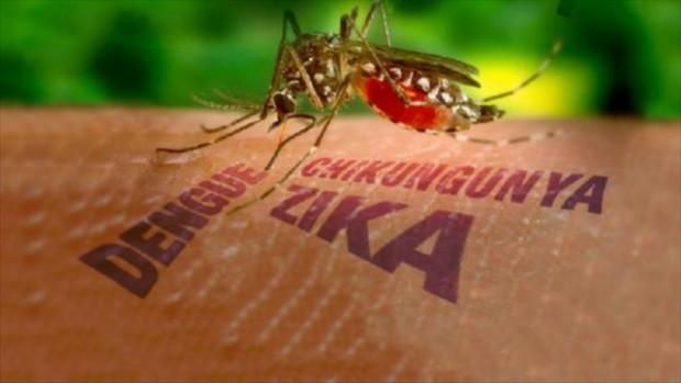 virus mosquitos