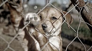 Photo of Buscan perseguir de oficio el maltrato animal en SLP