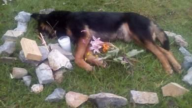 Photo of Juez en Villa de Zaragoza mata a perro a balazos