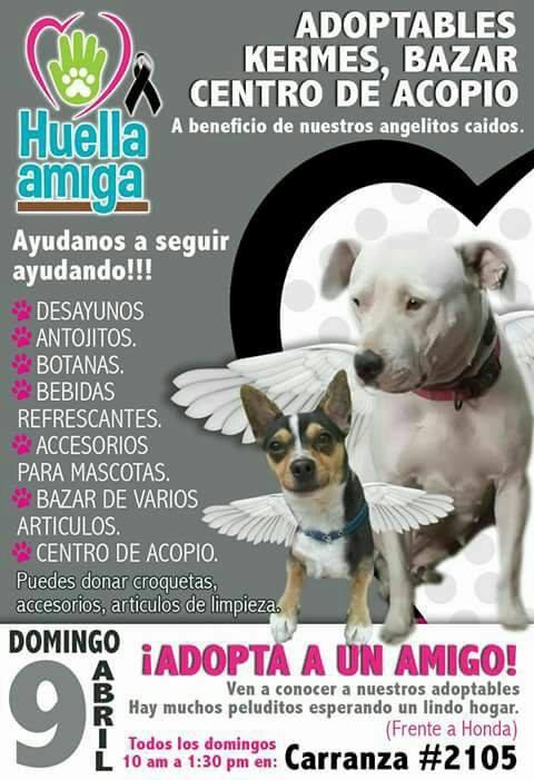 Kermes de adopción @ San Luis Potosí | San Luis Potosí | México