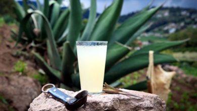 Photo of El pulque es una bebida ancestral que perdura