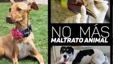 Photo of Se han registrado 110 casos de maltrato animal en SLP