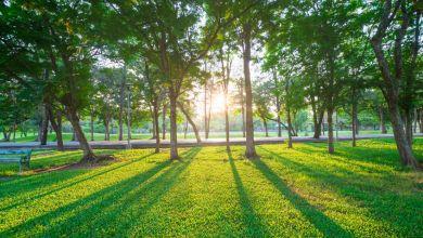 Photo of Charcas y Matehuala contarán con parques ecológicos