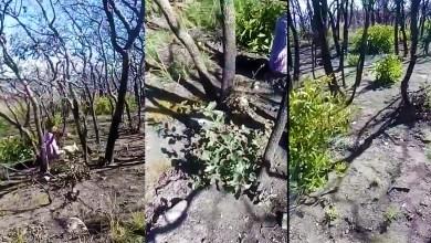 Photo of Video: La Sierra de San Miguelito se sigue recuperando