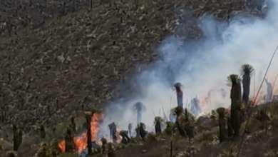 Photo of Se registra incendio forestal cerca de Cerro de San Pedro