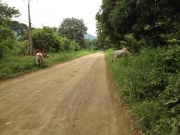 Tarcoles, Costa Rica