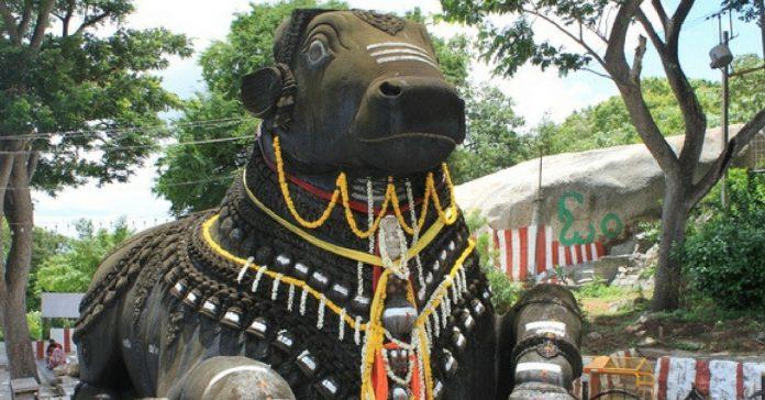 activities in basavanagudi
