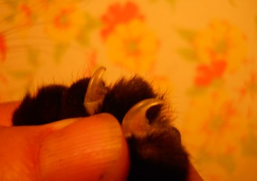 Bill would ban declawing of cats as cruel and inhumane