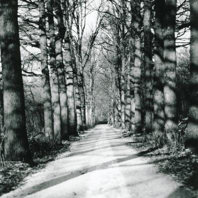 Veluwe bomenlaan