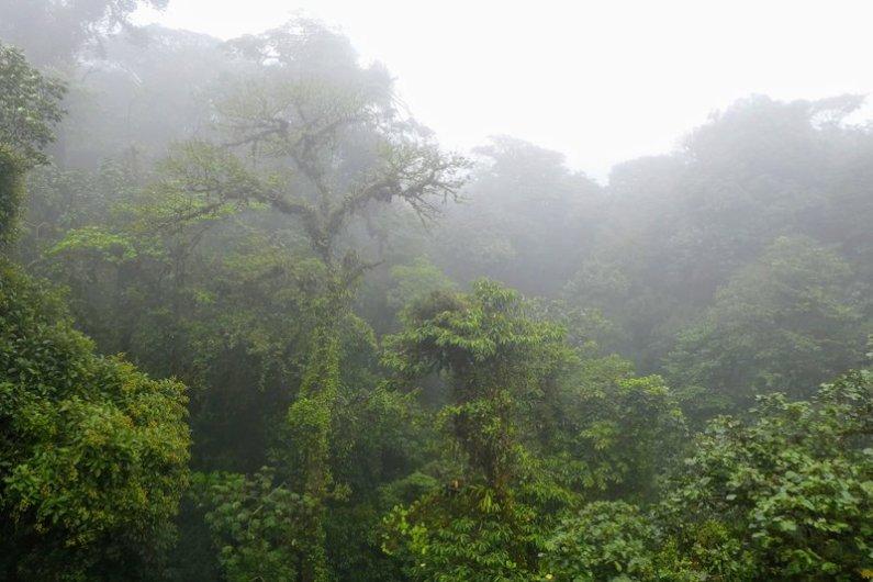 skyskoven monteverde costa rica
