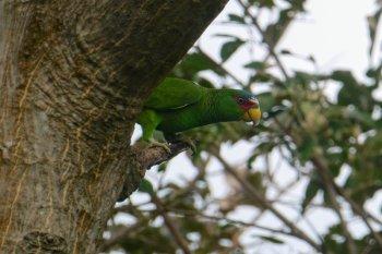 hotel hacienda guachipelin currubande rincon de la vieja costa rica papegøje
