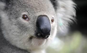 work and holiday visa Australia