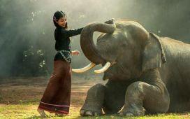 cómo hacer un voluntariado en Tailandia