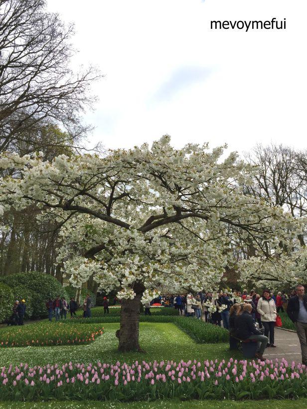 Keukenhof Garden Amsterdam