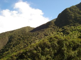 Iao Valley (13)