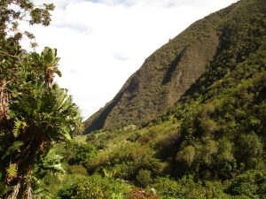 Iao Valley (14)