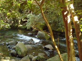 Iao Valley (18)