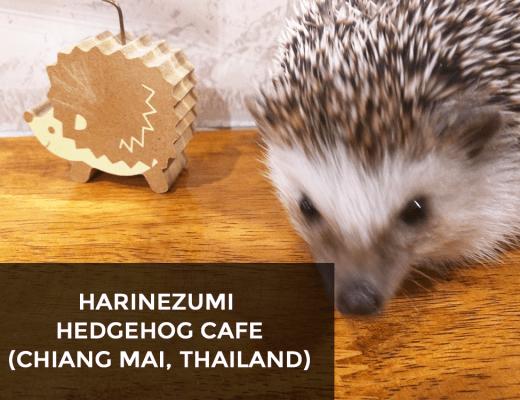 HARINEZUMI HEDGEHOG CAFE