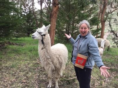 We found some llamas near our hotel