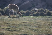 Altiplano - 72