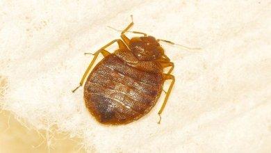 كيف أمنع حشرة البق من الإنتشار في منزلي؟