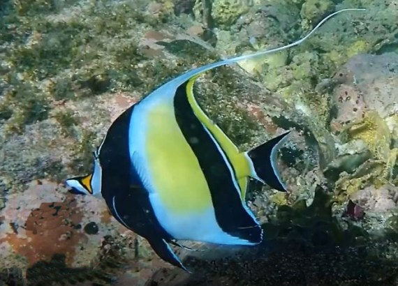 Moorish Idol Mexico Fish Birds Crabs Marine Life Shells