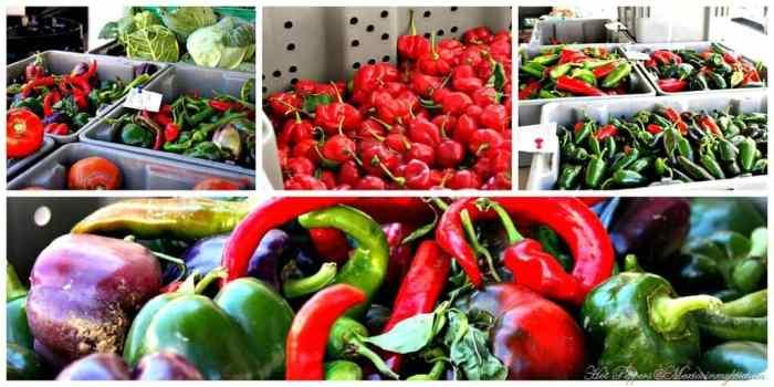 Salsa de Chile Habanero, aquí puedes ver la gran variedad de chiles