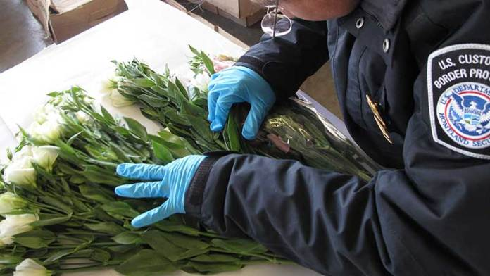 Advierten sobre importación de flores a EEUU por el Día de las Madres