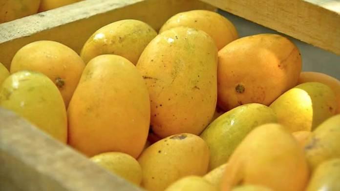 Exportación de mango veracruzano se agilizará gracias a embajador de EU