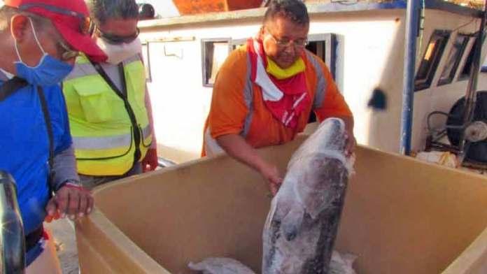 Cierran Florida y toda exportación pesquera se detiene