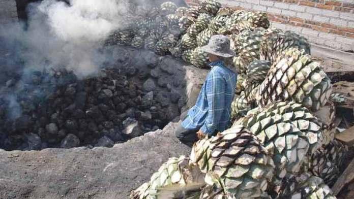 Se reduce 60% la producción de mezcal para Oaxaca