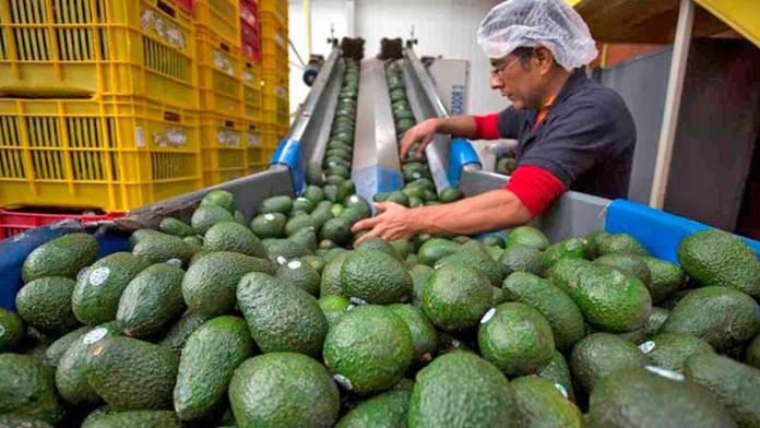 Subieron 4.26% las exportaciones agroalimentarias: Sader