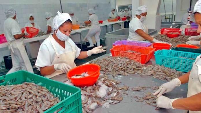 Plantas procesadoras de camarón en Sinaloa cumplen con las medidas de sanidad