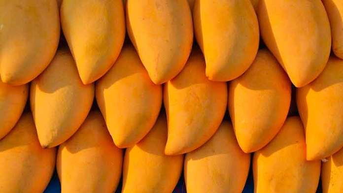 Mango exports from Mexico rise 6.9%