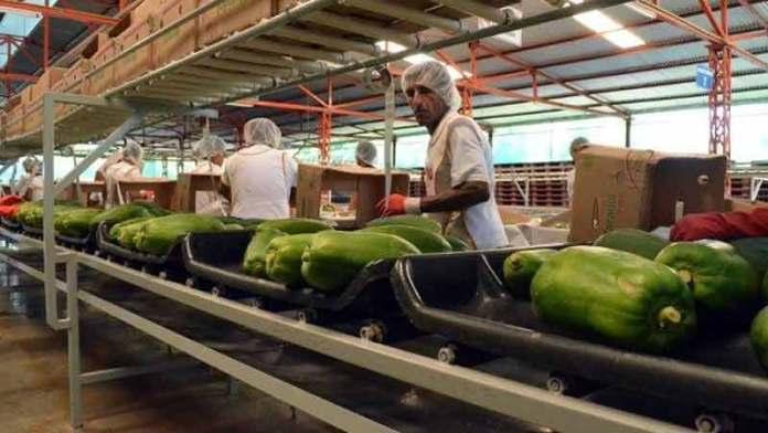 El superávit agroalimentario de México crece 30.9%