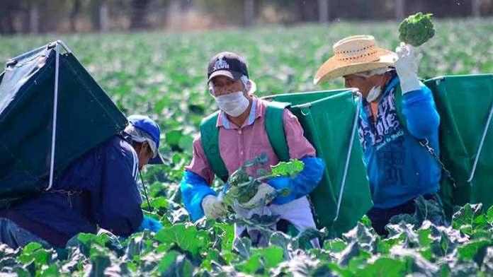 México requiere una defensa vigorosa en el sector agropecuario en el marco del T-MEC: CNA