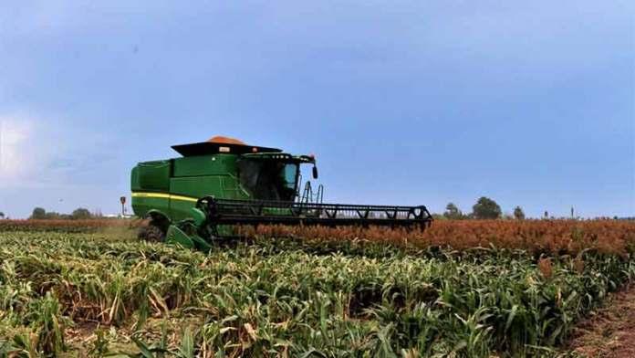 México abre mercado de exportación de sorgo a China