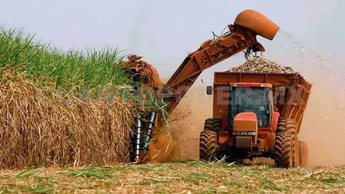 Industria Azucarera Tendrá Exportaciones Limitadas Durante La Administración De Joe Biden
