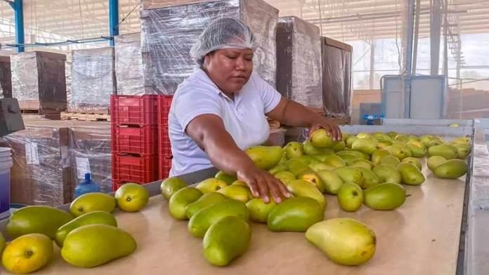 Sector agroalimentario, el único que se mantuvo en pie durante 'tormenta' pandémica